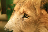 IMG_3629 lion.jpg