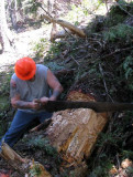 Crosscut sawing - 4.jpg
