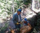 Crosscut sawing - 5.jpg