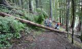 Tony barking a log