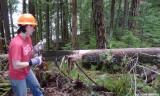 Danielle sawing a cedar
