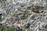 Cascade Cyn Trail
