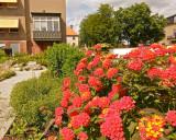 Botanical Garden - hibiscus