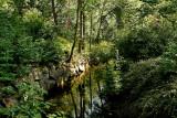 Tributary rivulet to river Svartån by Falkenbergska Kvarnen