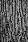 Motifs et Textures   /   Patterns & Textures