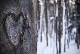 La Forêt mal-aimée