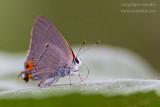 _MG_6662 butterfly lick w.jpg