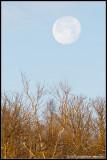 _MG_1079 xmas moonset cewf.jpg