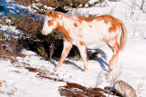 Foal on First Nations Land