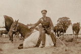 Traws War Horse.JPG