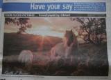 Cremello Daily Post.JPG