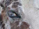 Paard - Horse