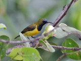 Birds of Java - Bali