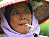 Lady tea picker in Java - Indonesia
