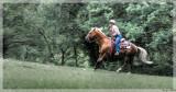 Horse show at Lignol