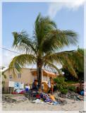 Palmier à la Pointe du Bout