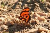 Butterflies in Brazil 2011