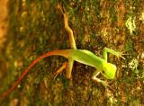 Amphibians in Brazil 2011