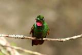 Birds in Brazil 2011