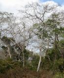 deciduous forest Tutuala Beach