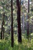 # moist eucalypt forests #