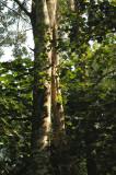 broadleaf evergreen forest