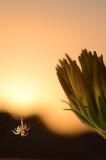 Spinning at Sunset