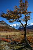 Patagonic autumn