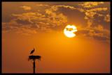 sunstork