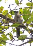 Catbirds - WSV Sasaki Garden