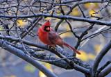 Favorite Bird Photos - WSV Sasaki Garden