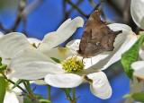 Butterflies - Washington Square Village Sasaki Garden