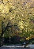 Elm Tree Over Woman & Child