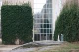 Metropolitan Museum of Art, Ivy Walls & Window Reflections