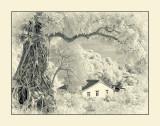 Lai Chi Wo, Plover Cove CP