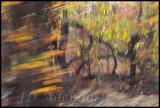 Kruger Park 2011