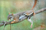 Backyard Piney Squirrels