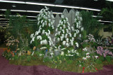 Grand Champion Display -RF Orchids (back side)