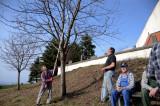 1. April: Traude testet die Profi-Astsäge