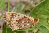 DSC09809F vlinder (Butterfly).jpg
