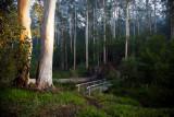 Pemberton Western Australia