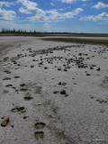 The Salt Plains, Wood Buffalo National Park