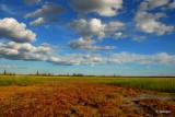Wood Buffalo National Park and Beyond....