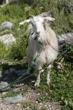 Xanthos March 2011 5096.jpg