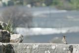 Xanthos March 2011 5163.jpg