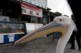 Fethiye March 2011 5719.jpg
