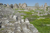 Perge march 2012 3851.jpg