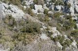 Termessos march 2012 3690.jpg