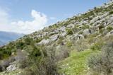Limyra march 2012 5145.jpg