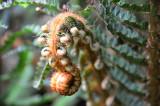 Feb122012_6827 fern forest bolivia.jpg